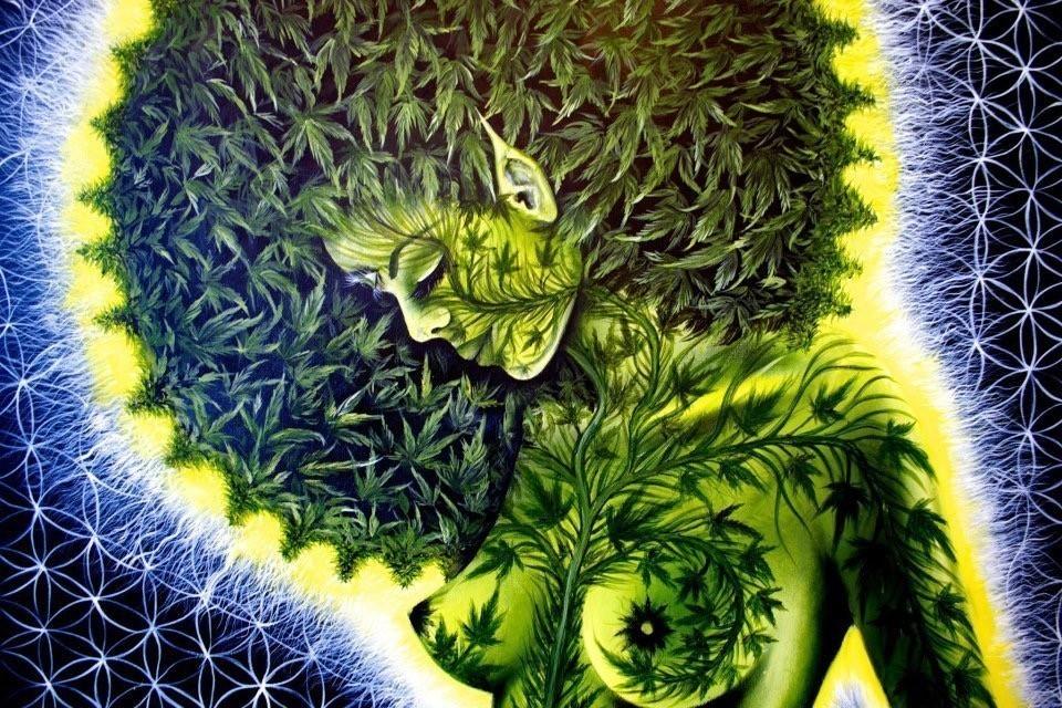 20 фактов о марихуане употребление марихуаны причины